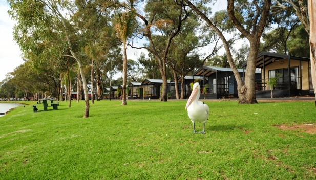 Renmark-Holiday-Park