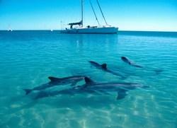 Monkey-Mia-Dolphin-Resort