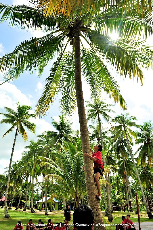 Coconut-tree-climb-3