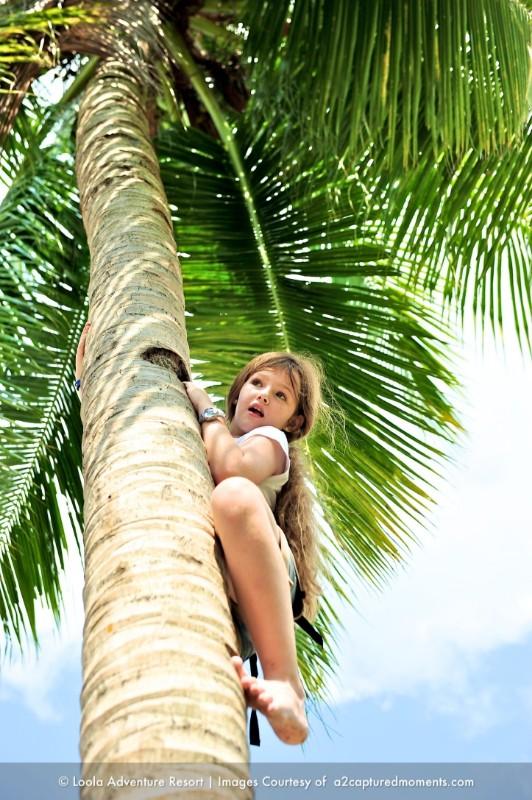 Coconut-tree-climb-4